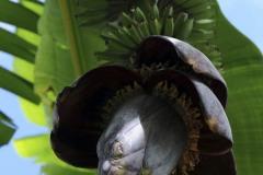 2011_02_05-20_41_41-Karibik