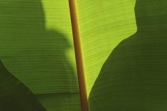 2011_02_05-20_44_23-Karibik