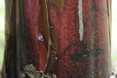 2011_02_05-20_47_57-Bananenstrunk