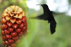 2011_02_06-19_00_05-Karibik
