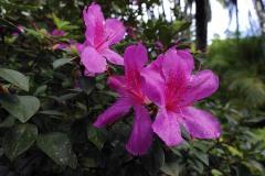 2011_02_06-20_36_05-Karibik