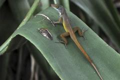 2011_03_29-16_03_04-Karibik