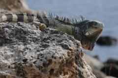 2011_07_15-21_42_10-Curacao