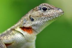 2012_03_20-15_26_09-Galapagos