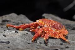2012_03_23-13_27_30-Galapagos