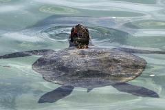 2012_03_23-14_24_42-Galapagos