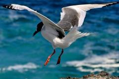 2012_03_31-15_16_56-Galapagos