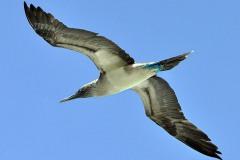 2012_03_31-15_30_52-Galapagos