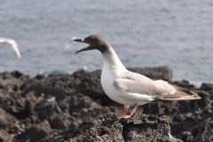 2012_03_31-16_40_49-Galapagos
