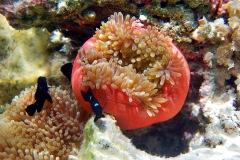 2012_11_03-15_38_07-Taha-Unterwasser
